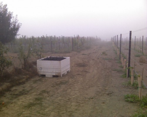 Harvest_092409_001