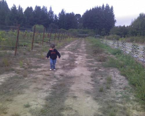 2010 Harvest Update!