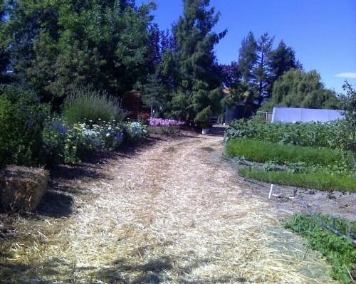 Devoto Gardens field report: 8/13