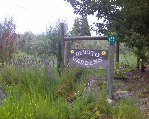 Devoto Gardens field report: 8/20