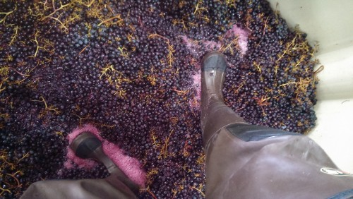 Our 2014 Cabernet Franc